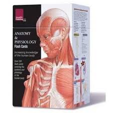 Best Anatomy And Physiology Textbook Booktopia Anatomy And Physiology Flash Cards By Scientific
