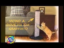 gatti divani la comportamentalista il gatto distrugge i divani con le unghie