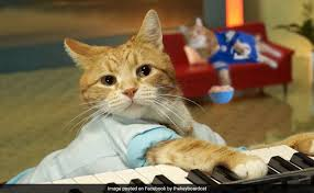 Keyboard Cat Meme - bento the keyboard cat dies was one of the internet s first memes