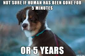 Cool Dog Meme - dog can t tell time very well meme