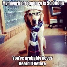Hipster Dog Meme - oh you hipster dogs hipster dog meme love scarf glasses