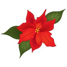 christmas flowers christmas flowers clipart