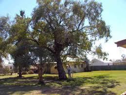 file kidman s tree of knowledge 2005 jpg wikimedia commons