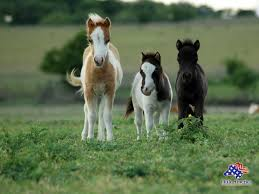home interior horse pictures aadenianink com