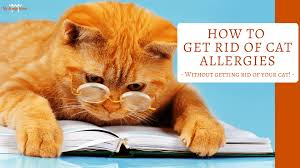 how to get rid of cat allergies without getting rid of your cat