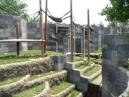 primates sumatran orangutan