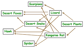 food web trophic levels food web explained with diagram