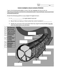 muscle contraction worksheet answers fill online printable