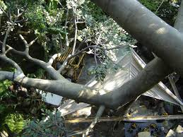 disney vacation kingdom swiss family robinson treehouse