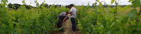 chambre d agriculture du maine et loire soirée objectif installation en viticulture biologique services