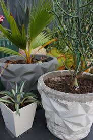 garden pots australia photo album 177 best vintage concrete pots images on pinterest concrete