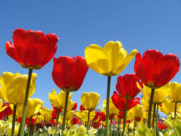 hd images of flowers spring flowers background spring flowers wallpapers in red