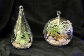 glass teardrop terrarium 5