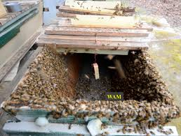 package bee installation in top bar hives u2013 200 top bar hives the