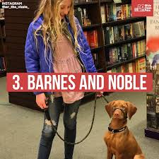 Barnes And Noble Blaine Mn Dog Friendly Retail Chains 12 Stores That Allow You To Shop With