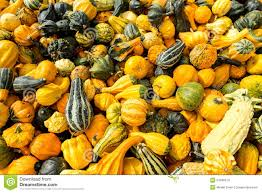 lot of colorful ornamental squash stock photo image 34396574