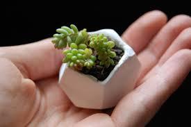 diy tiny polymer clay plant pots clay plants and tutorials