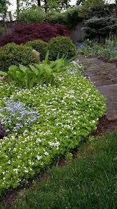 Backyard Ground Cover Ideas Interesting Backyard Ground Cover Ideas At Cabfeedbcd On Home