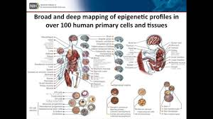 Nih Map The Nih Roadmap Epigenomics Program Kim Mcallister Youtube