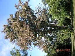 Cairns Botanical Garden by Dscn1650 Jpg