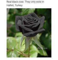 real black roses real black they only exist in halfeti turkey meme on me me