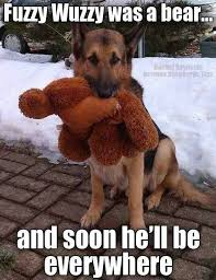 Funny German Shepherd Memes - pin by tonya wilson on memes animal humor pinterest animal humour