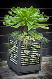 120 best container gardening images on pinterest gardening