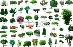 garden design garden design with small and ornamental trees
