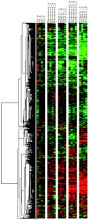 regulation of intestinal epithelial cells transcriptome by enteric