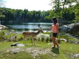 Les Meilleurs Parcs Les Meilleurs Parcs Zoologiques De Montréal Bons Plans Voyage