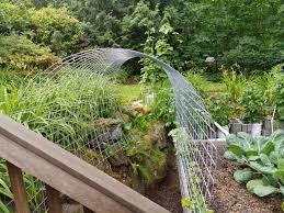 my new garden trellis tunnel for things like chamoe minnesota