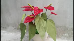 Paper Flowers Video - abc tv how to make anthurium paper flower from crepe paper