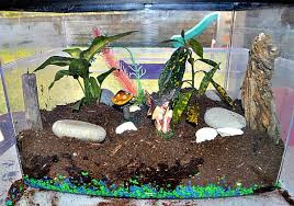 gardening with kids make a fish tank terrararium fun littles