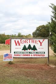 worthey christmas tree farm mud and magnolias