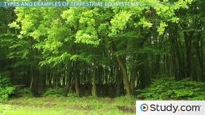 what is a terrestrial ecosystem definition examples u0026 types
