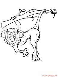 monkey color