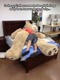 Teddy Bear Meme - giant teddy bears are the best giant teddy bear funny images