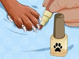 how to put nail polish on your dog u0027s nails 12 steps