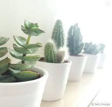 le bureau verte plante bureau plantes vertes bureau bureau plante verte isawaya info