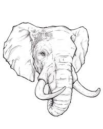 how to draw an elephant head step by step easy for beginners video