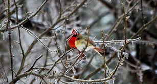 southern birds may be moving into your winter backyard science