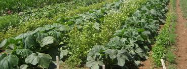 starting an herb garden in arizona a u0026p nursery