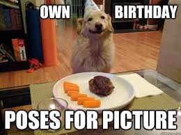 Birthday Dog Meme - grateful birthday dog memes quickmeme