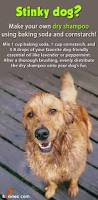 38 best for my dogs images on pinterest