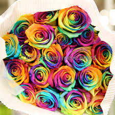 multicolored roses multi color roses steve heard photography steve heard photography