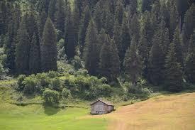 free photo hut alpine firs trees mountain free image on