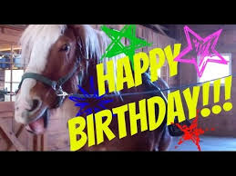 Horse Birthday Meme - talking horse wishes you a happy birthday youtube