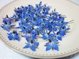 edible blue flowers borage blossoms