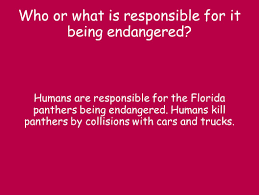 endangered species florida panther by mimi and kate ppt download