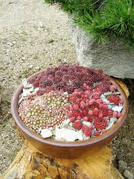 Small Rock Garden Design by Small Simple Rock Garden Ideas Beautiful Succulent Rock Garden